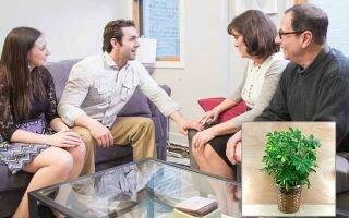 Шефлера в доме: приметы и суеверия